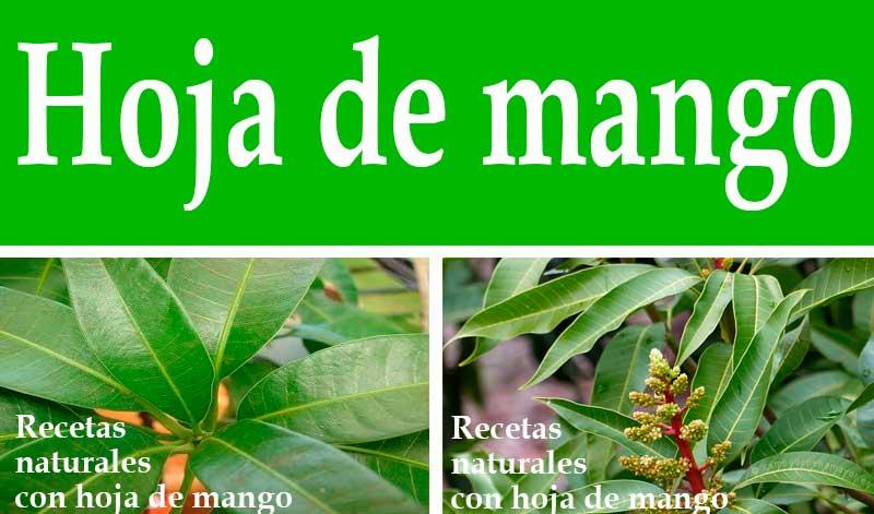 Recetas con hoja de mango y sus beneficios